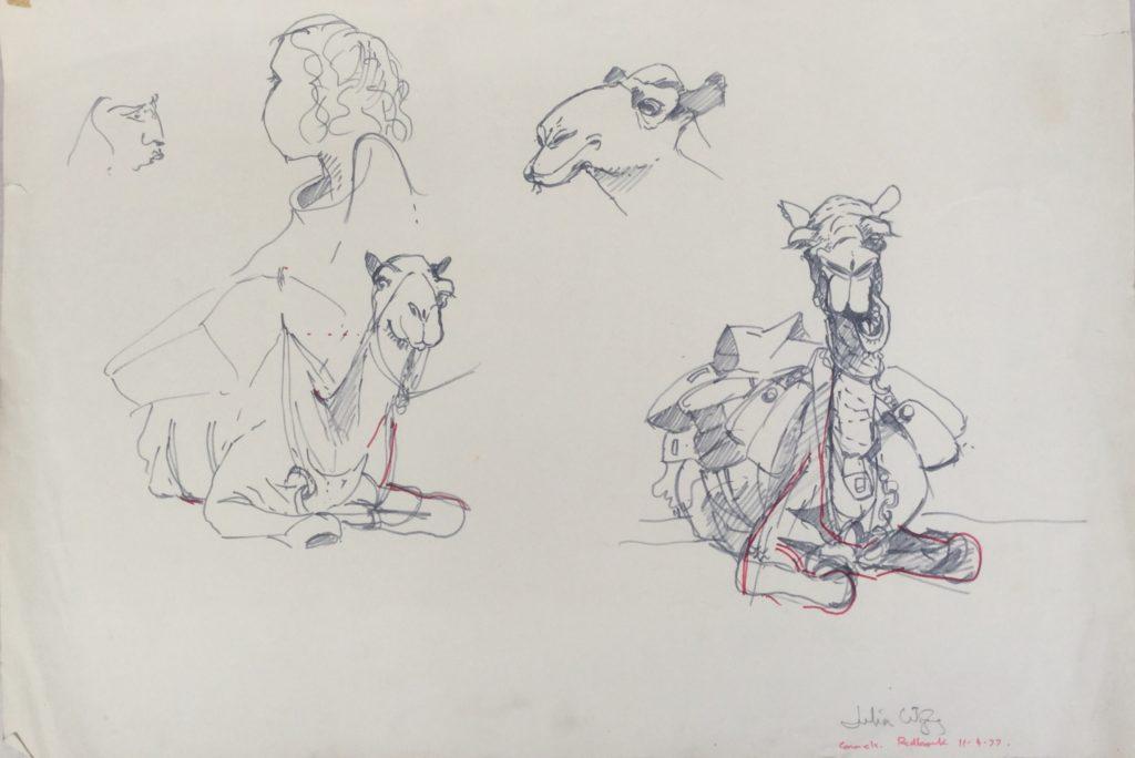 Camel Drawing